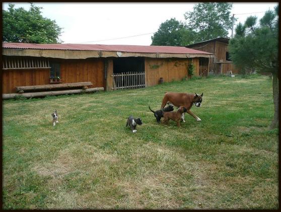 Les jardins de passiflore levage de boxer - Les jardins de passiflore ...